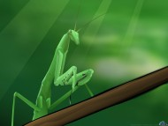 mantid / 3D Animals