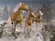 Download horse / 3D Animals