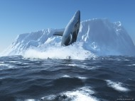 whale iceberg / 3D Animals