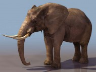 elephant / 3D Animals