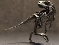 Evil running dinosaur skeleton / 3D Animals