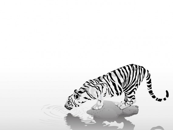 Free Send to Mobile Phone tiger watering 3D Animals wallpaper num.24