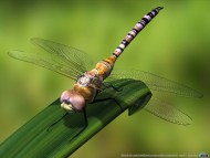 dragonfly / 3D Animals