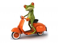 Frog is riding on moto / 3D Animals