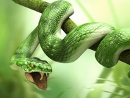 Download snake / 3D Animals