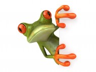 Frog is hiding / 3D Animals