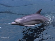 dolphin / 3D Animals