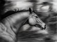 horse / 3D Animals