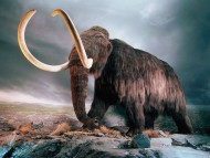 mammoth / 3D Animals
