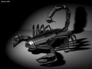 Download scorpion / 3D Animals