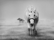 white horse / Digital Art