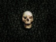 skull / Horror