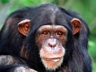 Apes / Animals