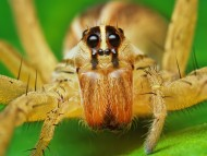 Download macro yellow spider / Arachnids