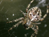 spider on the web / Arachnids