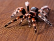 spider on table / Arachnids