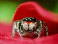 Download spider hiding / Arachnids