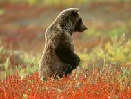 Bears / High quality Animals