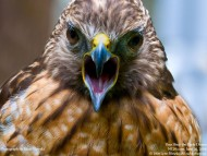 Screech / Birds of Prey
