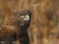 Birds of Prey / Animals