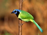 High quality Birds  / Animals
