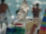 seagull / Birds