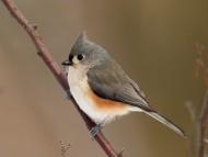 Birds / High quality Animals