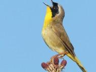 Download Birds / Animals