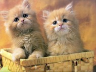two kittens / Cats