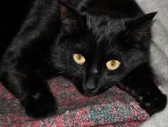 black / Cats