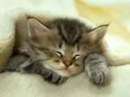 sleeping / Cats