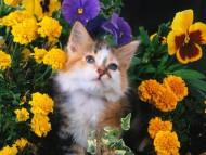 flower / Cats