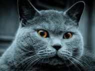 muzzle / Cats