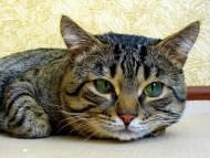 cat muzzle / Cats