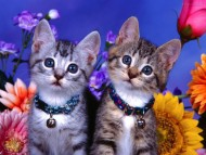 Download two kittens / Cats