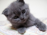 grey / Cats
