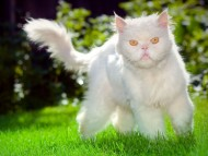 white cat outdoor / Cats