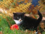outdoor / Cats