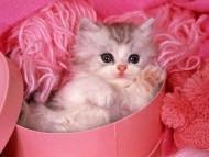 kitten / Cats