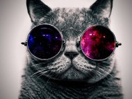 Awesome cat with glasses / Cats