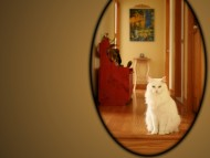 Cat In The Mirror / Cats