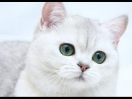 white kitten / Cats