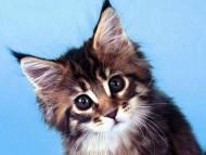 Download Cats / Animals
