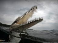 scary fall / Crocodiles