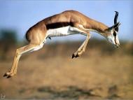 Deers / Animals