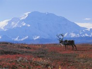 HQ Deers  / Animals