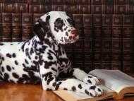 HQ Dogs  / Animals