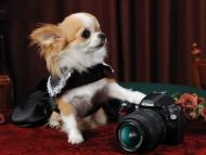 foto / Dogs