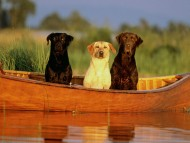Rollin' on a river / Dogs