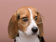 bespectacled / Dogs